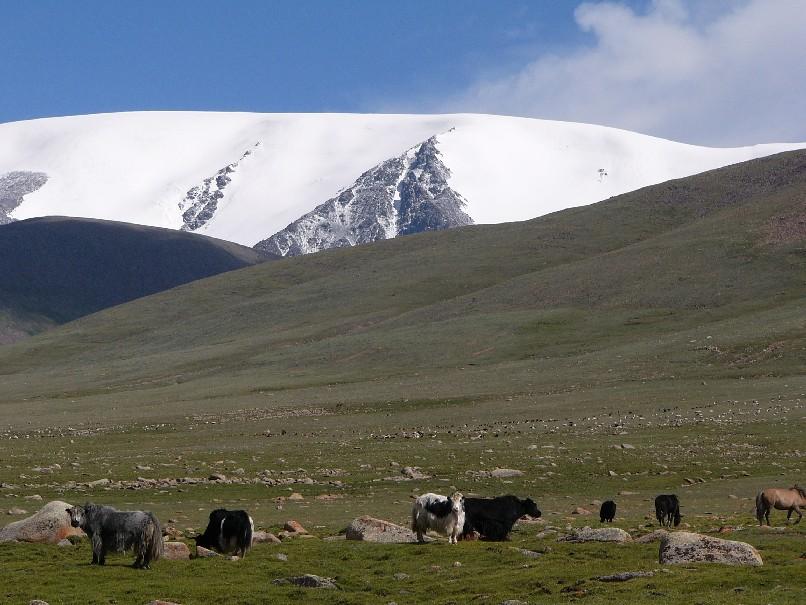 yachs mongolie